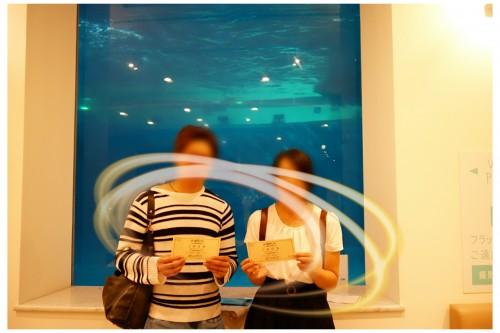 イルカの見えるレストランDE恋活カップル